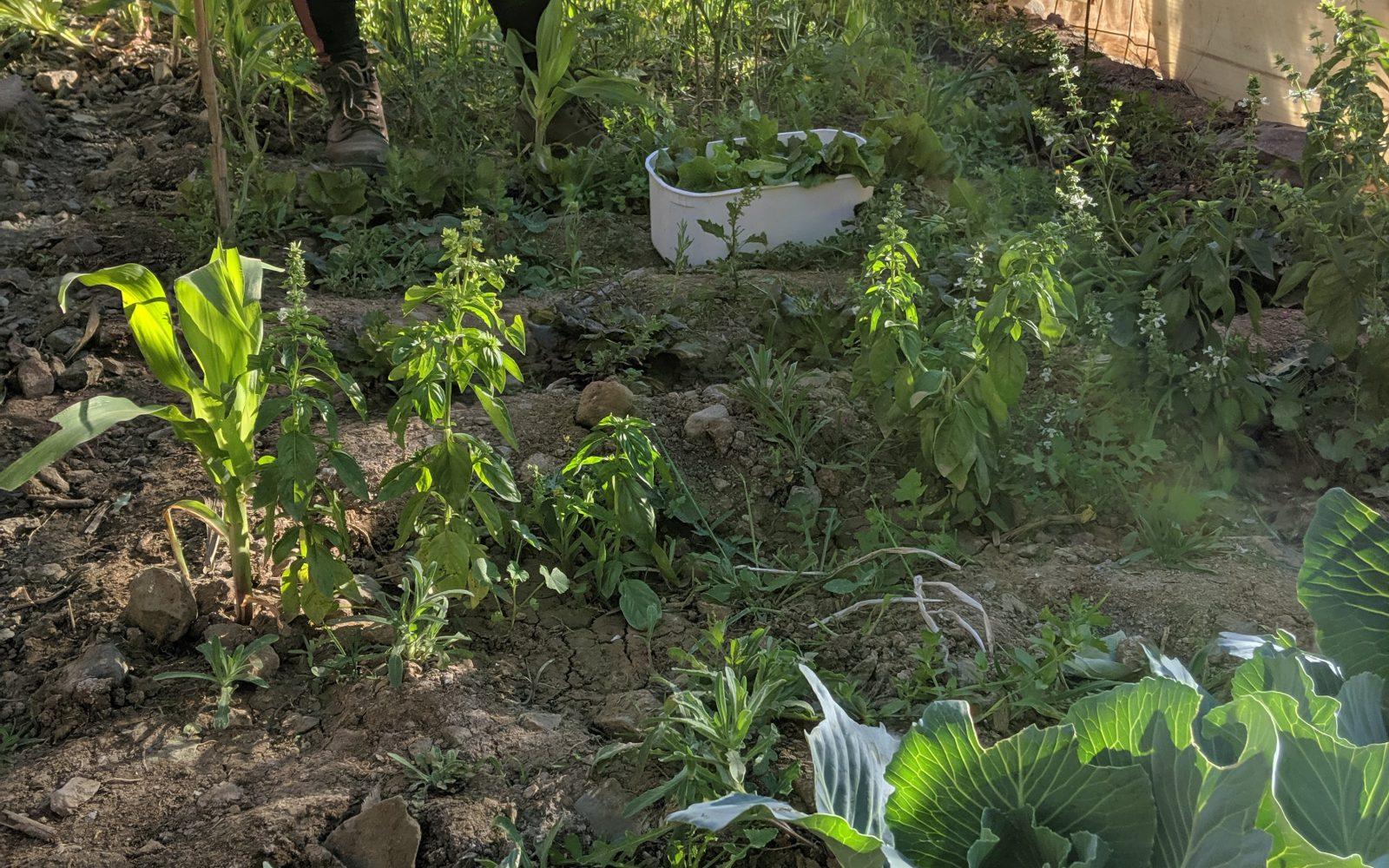Biologische tuinbouw